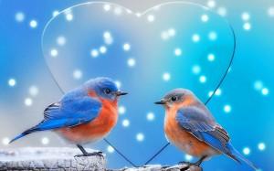 pajaritos y corazon celeste-608479