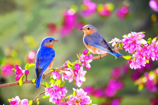 uccellini-in-primavera